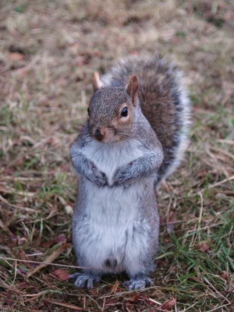 Squirrels Penis 98