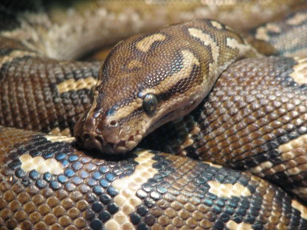 snake nailed to door & Snake Nailed to Door Ruins Evening for Defendant - Lawhaha.com ...