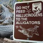 Don't Feed Hallucinogens to Alligators